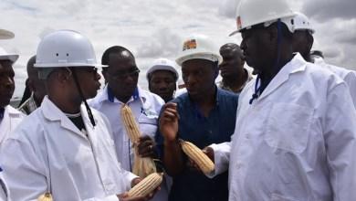 raila on maize production