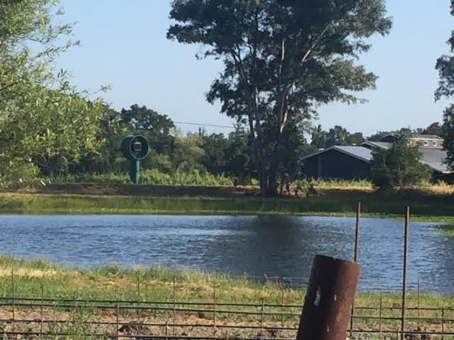 grassi pond