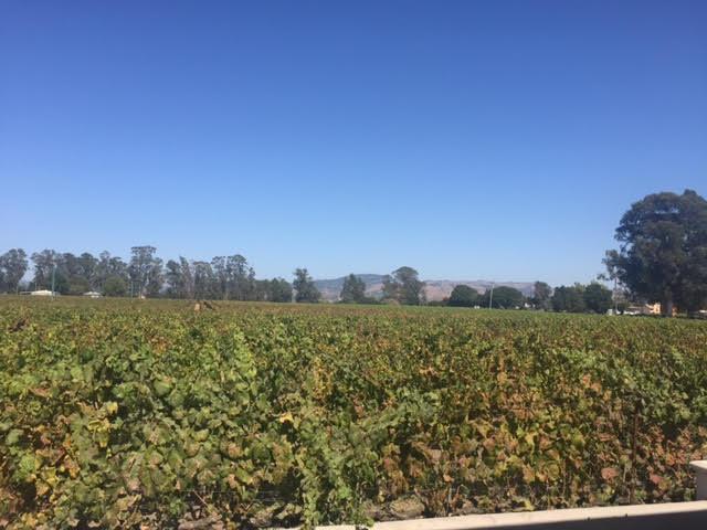 ceja-wide-vineyard-shot