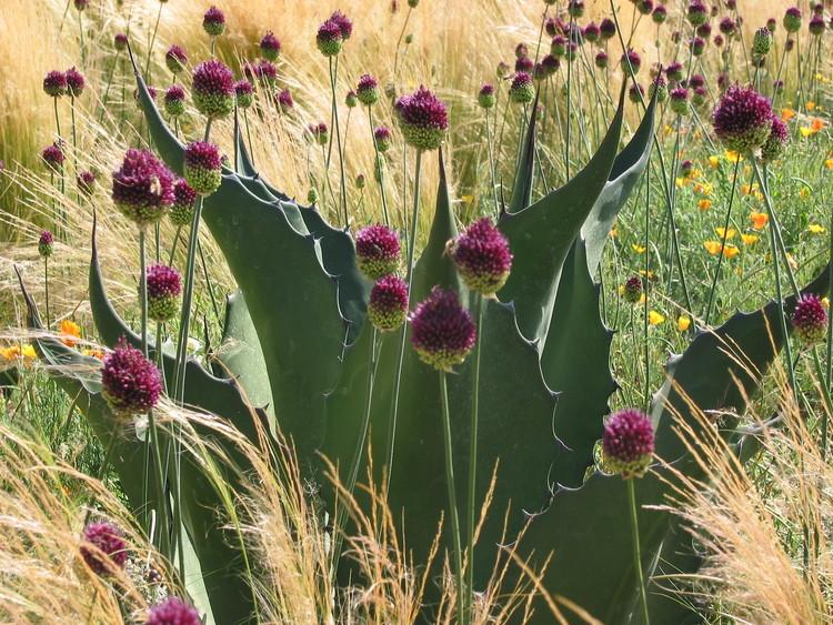 Cornerstone Garden of contrast
