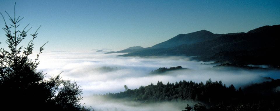 Spring Mountain fog