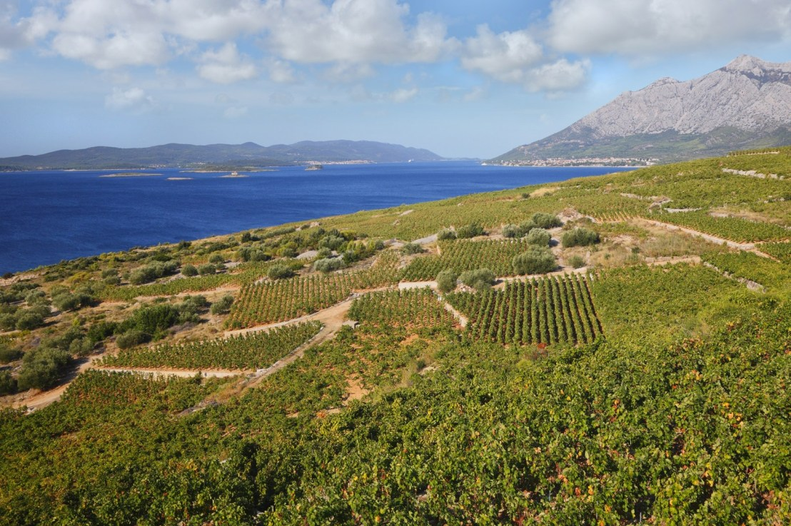 Huge Croatian wine shipment- new varietals and producers