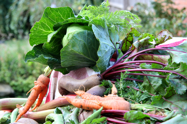25 Reasons Why Growing Your Own Food Is Better Healthy Lifestyle Tips And Travel