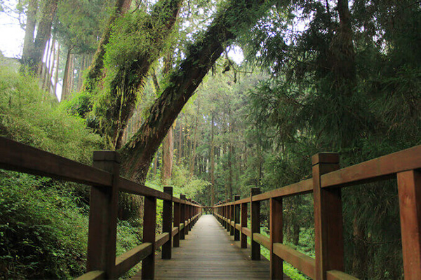 A Restful Mountain Retreat – Alishan National Scenic Area