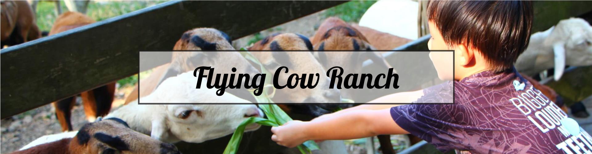 Lush Green Fun – Flying Cow Ranch 2 day Tour