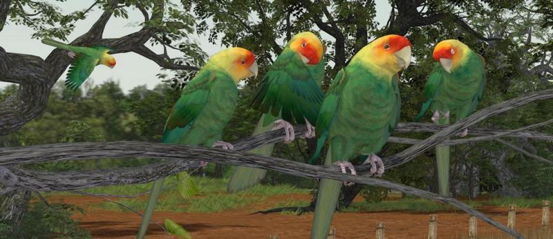 Каролинские попугаи