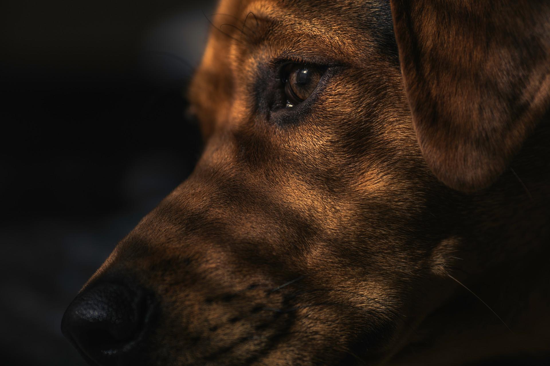 Calcio y fósforo en perros
