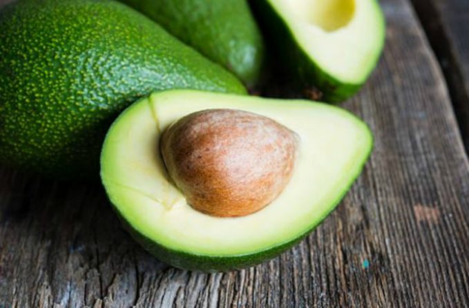 aguacate toxico perros