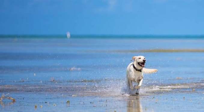 Playas que admiten perros en España - perro corriendo