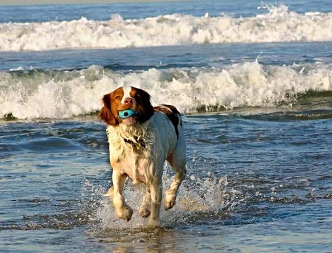 Playas que admiten perros en España - perro en la playa