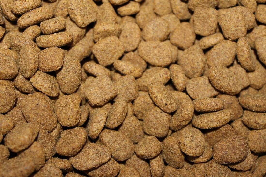 Alergia perros