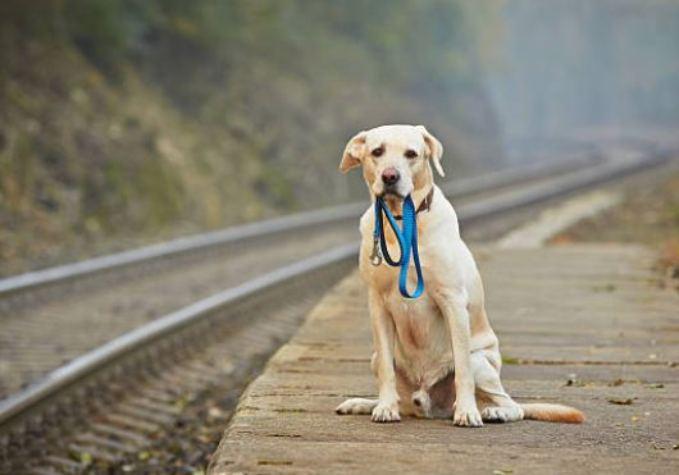 Identificador para perros
