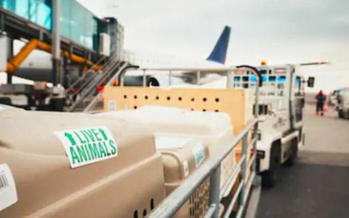 Empresa de transporte de perros de nacional e internacional