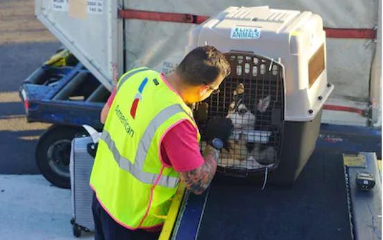 Transporte de perros y mascotas