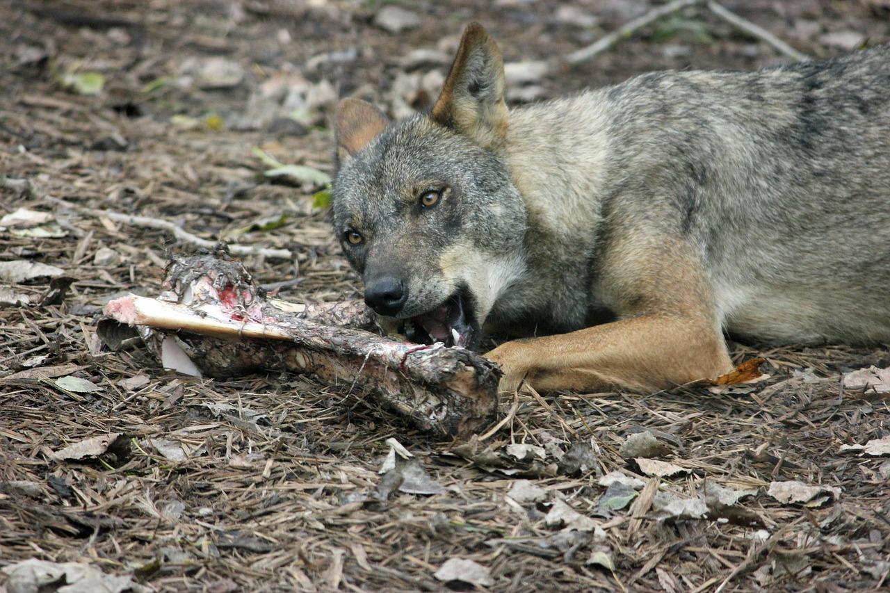 huesos para perros crudos