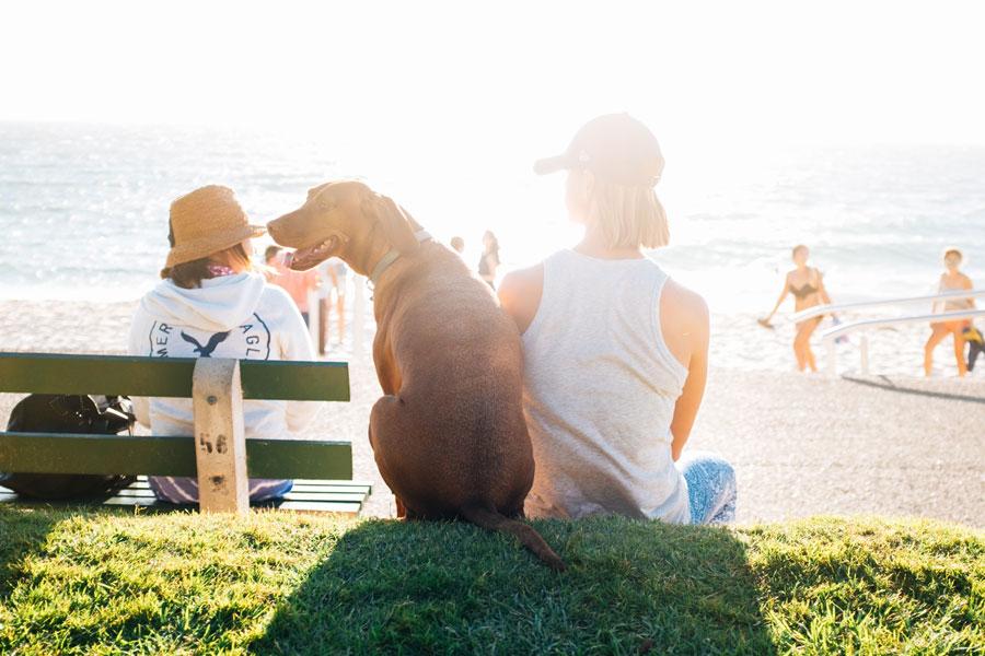 Razones para tener seguro de perros