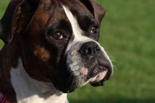 Prevenir los gases en los perros