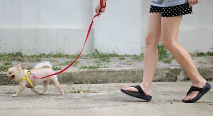 Mejores correas para perros