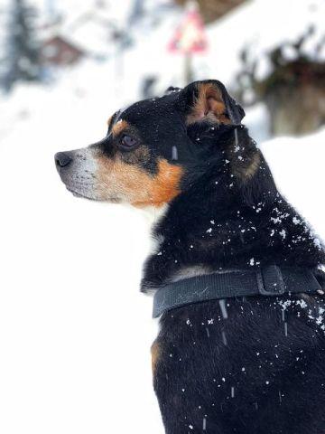 Cuidados del perro en invierno