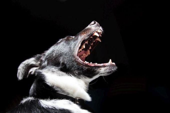Mordida de perro - ¿por qué muerde un perro?