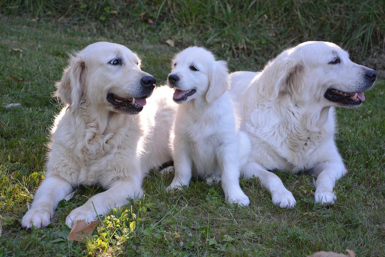 Mejores piensos para perras lactantes y embarazadas