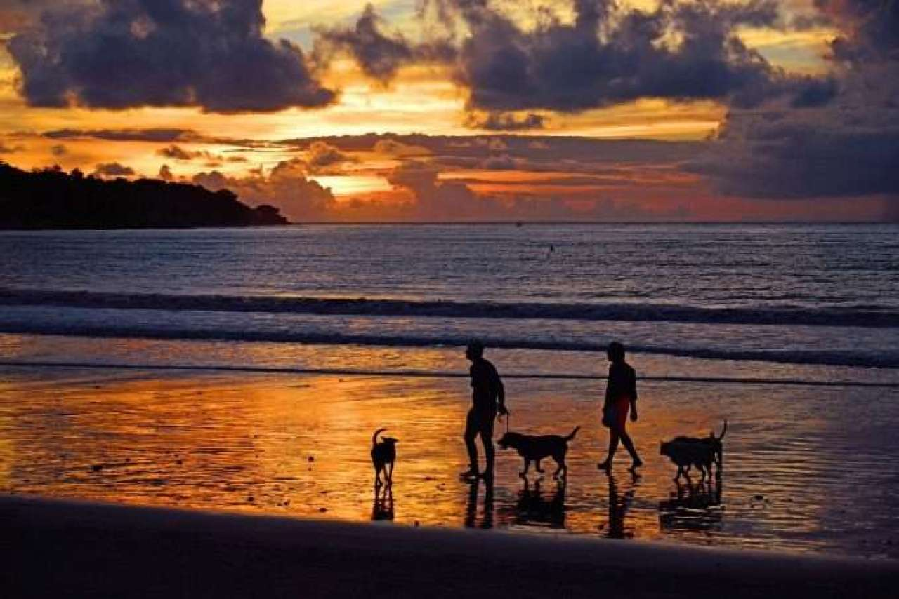 Perros paseando por la playa