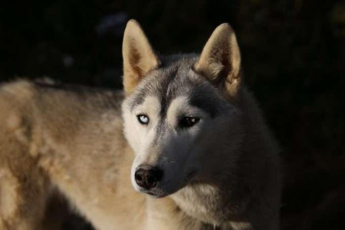 Qué es la acupuntura en perros