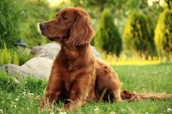 tipos de pelo en el perro medio largo