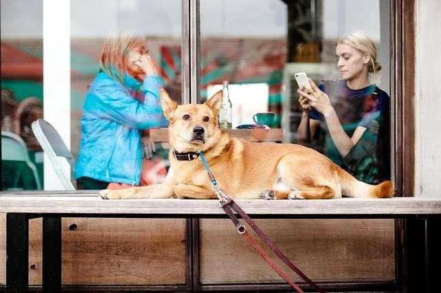 Terraza Verde para perros