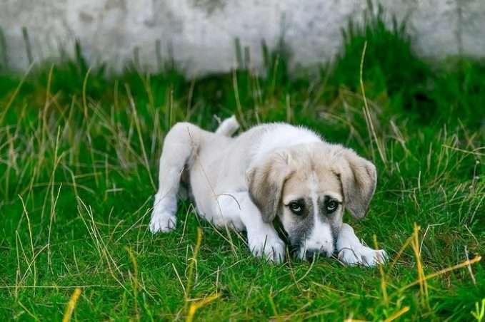 úlcera gástrica en perros