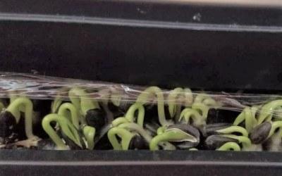 A Microgreens Miracle