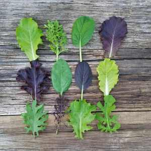 Toppled Barn Farm Salad Mix