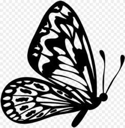 Flying Butterfly Clipart Black And White