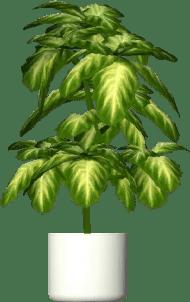 Logo Lantas Png : lantas, Download, Lantas, Aglaonema, Crispum, Planta, Images, TOPpng