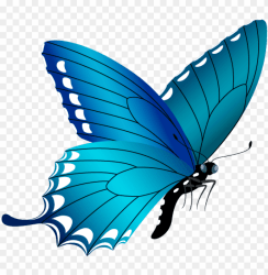 blue butterfly png image free butterfly clipart PNG image with transparent background TOPpng