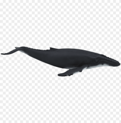 humpback whale animal planet humpback whale PNG image with transparent background TOPpng
