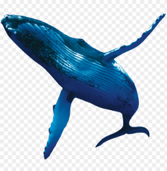 humpback whales whale PNG image with transparent background TOPpng