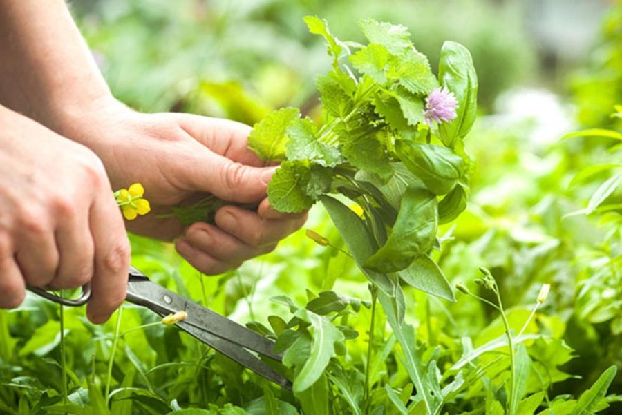 Ко засади ове биљке, зарада је загарантована: За 10 ари дође више од 2.000 евра