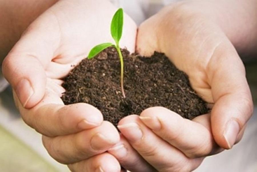 Гајење семена парадајза, паприке и купуса – шанса за добру зараду