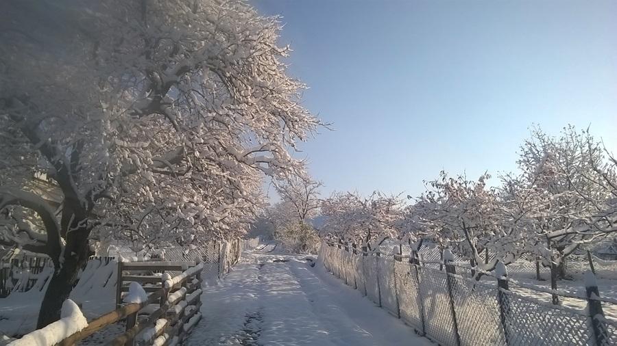 Данас хладно, температура до три степена
