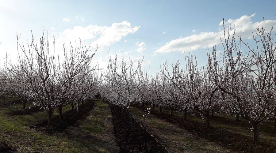 Пролећни мраз оштетио воће поред река