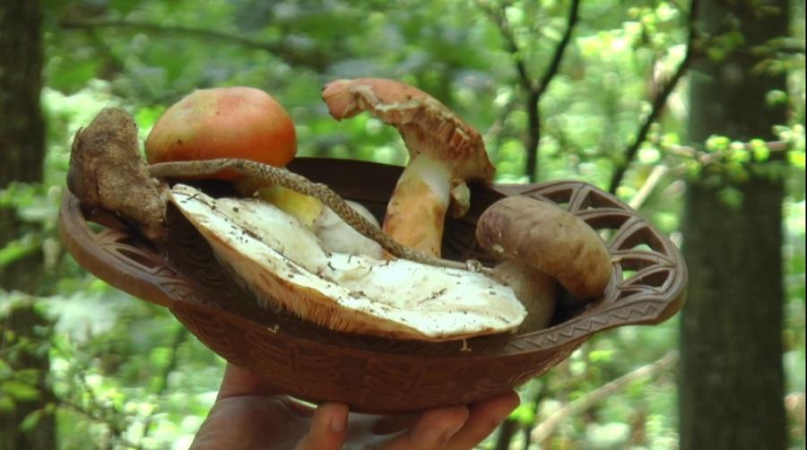Будите опрезни док берете печурке јер у шуми вребају заводнице