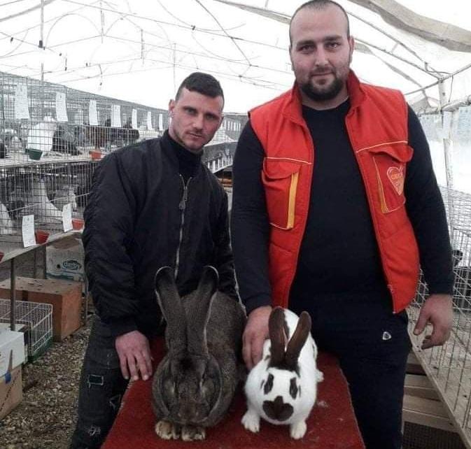 Милош и Марко гаје куниће и освајају пехаре, основали су и Удружење одгајивача ситних животиња
