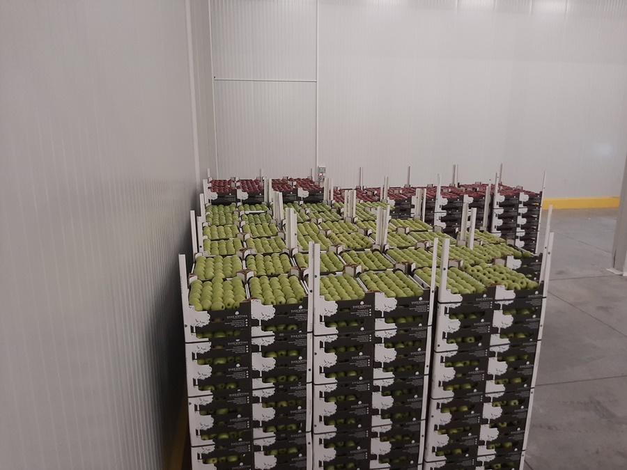 """У години """"короне"""" извоз воћа забележио раст за око 19 одсто"""