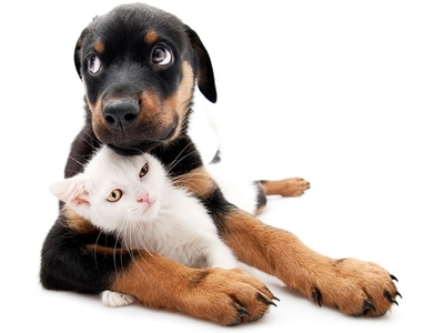 Best Products for Pets