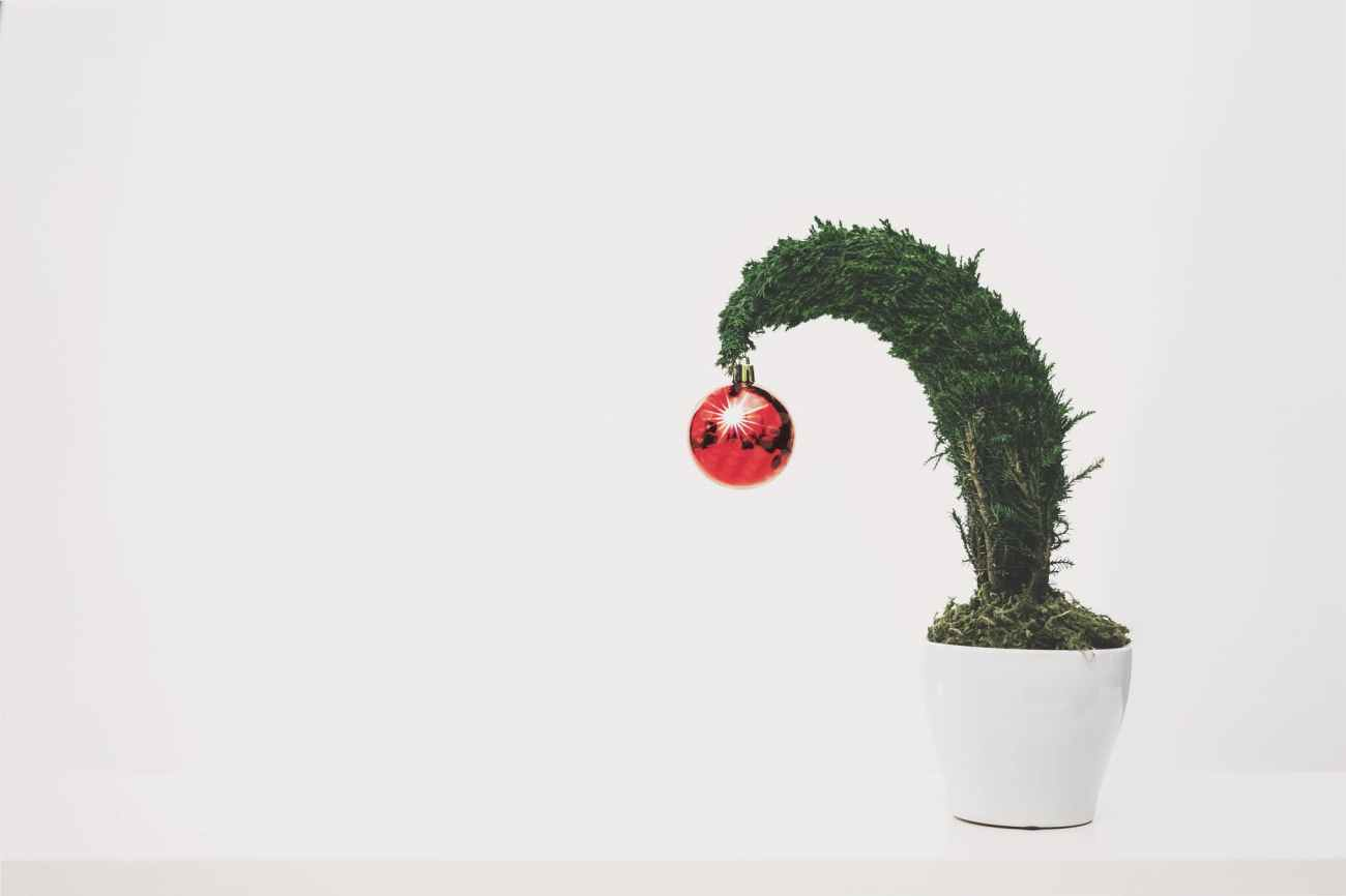 green plant with red ornament planted in white ceramic pot