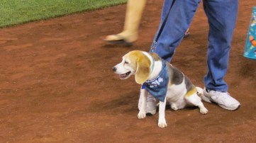 It was bark at the park night