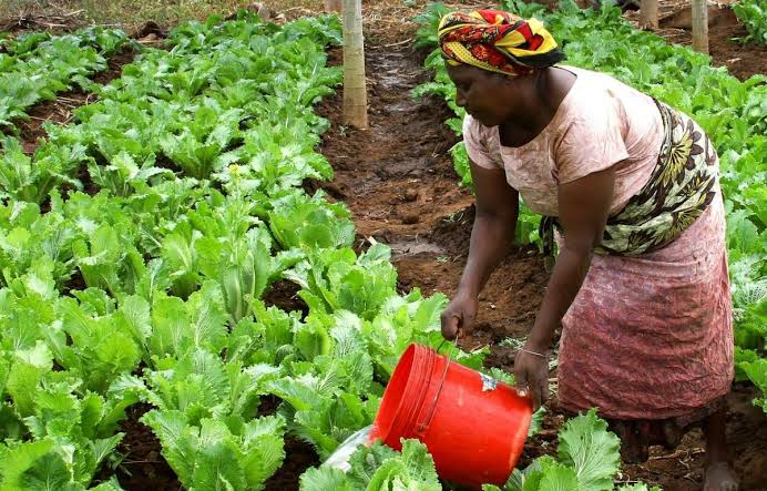 Structural Transformation of African Agriculture and Rural Spaces (STAARS) fellowship program