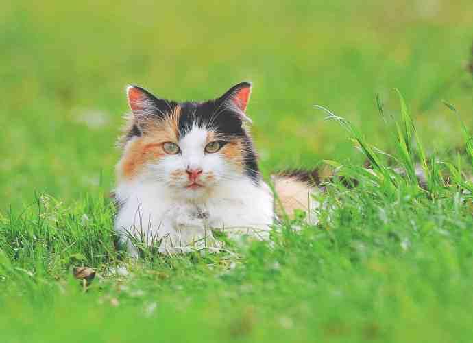 foder til katte