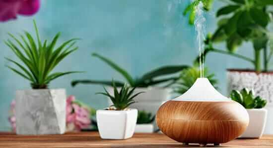 Essential Oils in A Humidifier